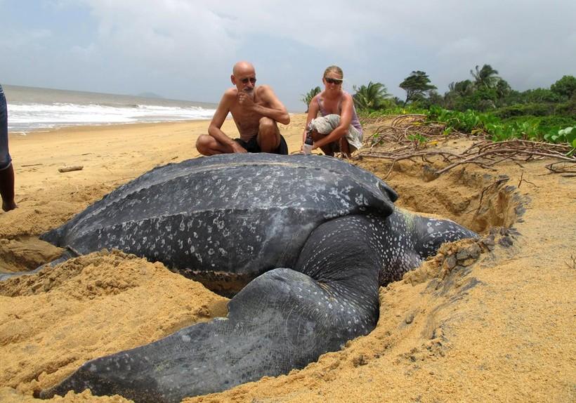 12 гигантских животных, которые, казалось, могут только присниться в кошмарном сне