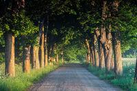 18 самых живописных аллей планеты. Когда прогулка становится мечтой