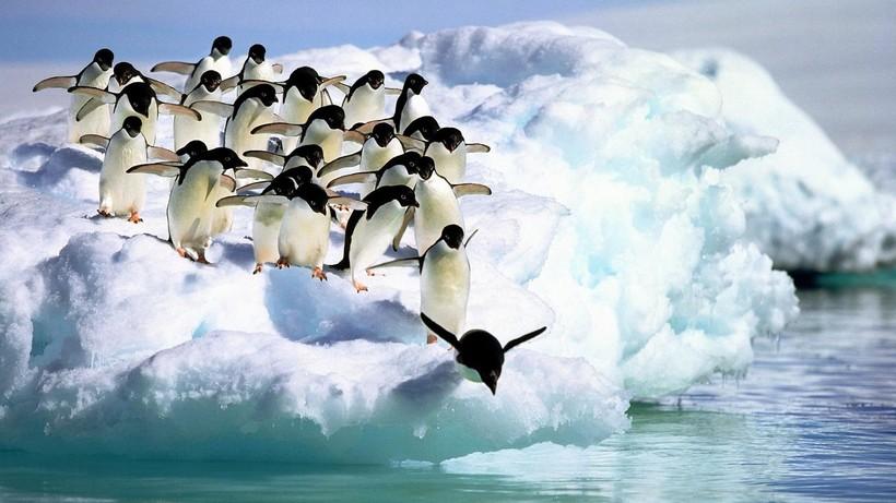 На фото: пингвины Адели