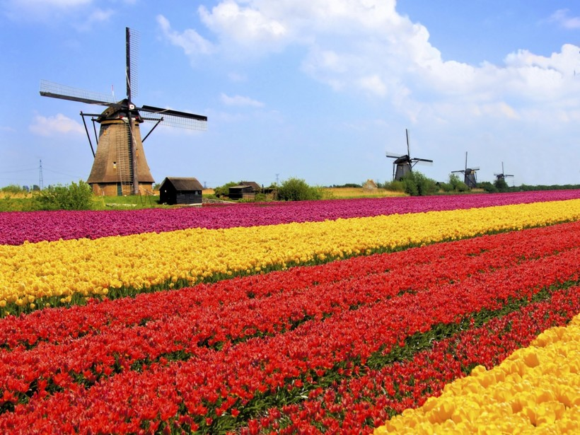 Удастся ли Голландии избежать затопления?