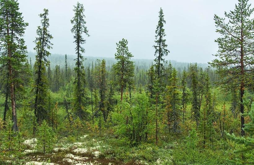 Картинки природные зоны тайги
