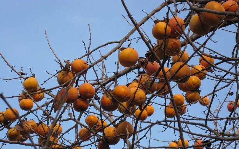 Осень в Сочи: запасаемся витаминами!