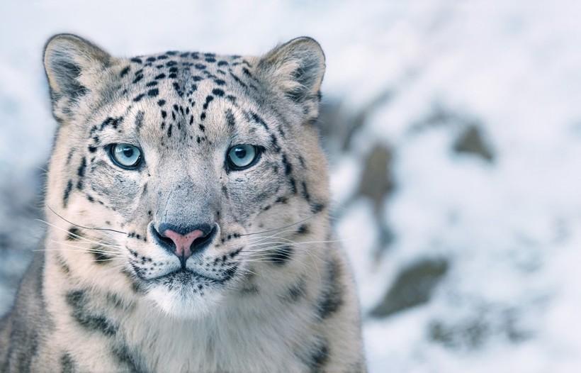 12 портретов животных, которые находятся на грани вымирания, сделанные Тимом Флэчем