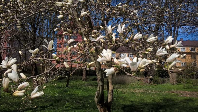 Весна на улицах города, Калининград
