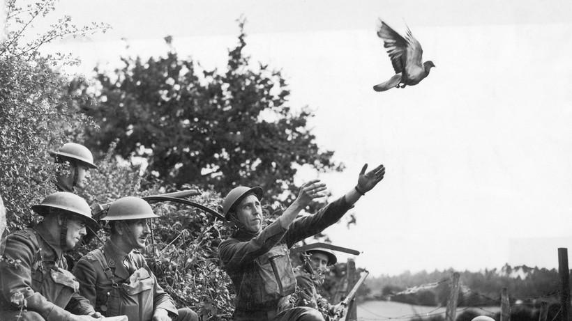 Бойцы невидимого фронта: как голубей использовали в качестве связистов и фотошпионов