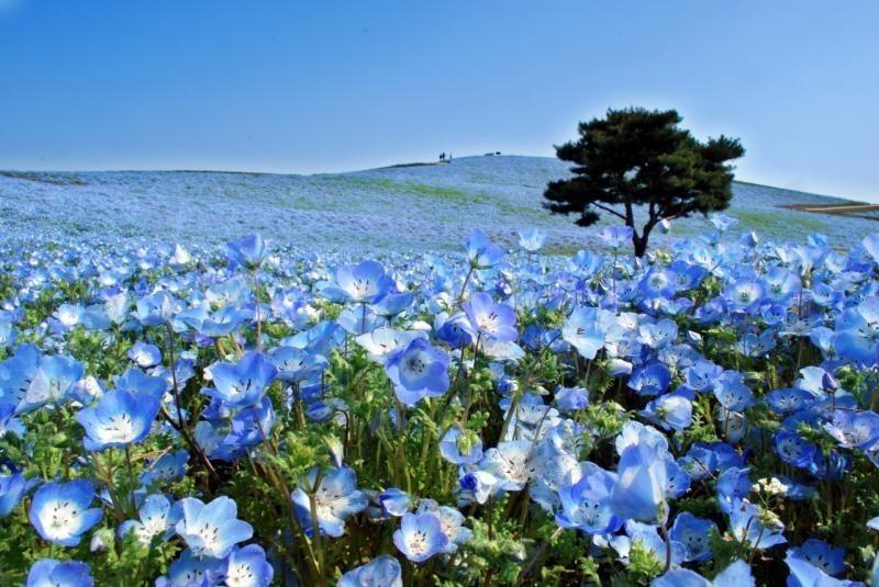 Волшебные фотографии невероятного парка в Японии, где всегда что-то цветет