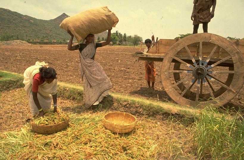 потолков аграрное общество это картинки актеры умерли нищите