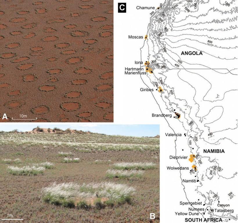 Ведьмины круги в пустыне Намиб: загадка, которой пока нет объяснения