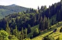 Лес Карпат