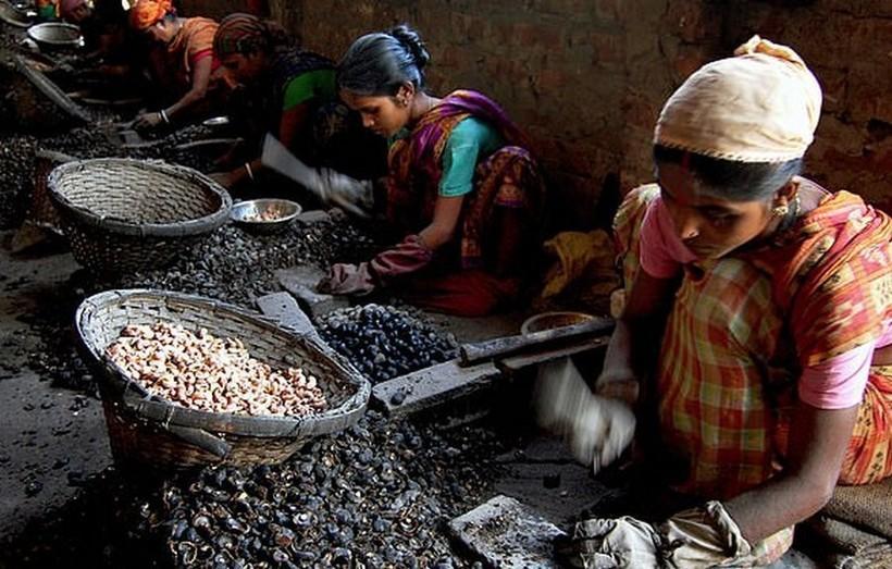 Чего стоит сбор кешью: какой ценой жители Индии получают любимый всеми орех