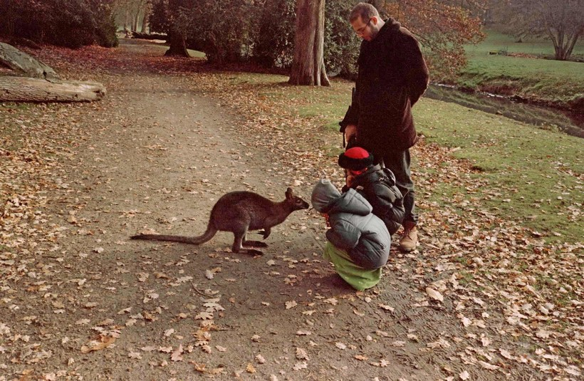 Приключения кенгуру в Европе: в дикой природе Франции обитает популяция сумчатых