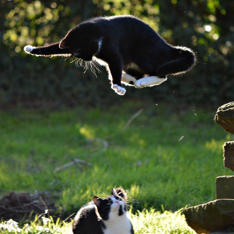 обложке картинки приколы про домашних животных сфотографировать