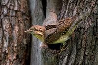 Великолепные снимки, победившие на конкурсе «Птичий фотограф года»