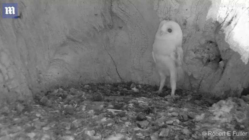 Видео: Реакция совенка, который впервые в жизни услышал гром