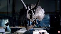 Видео: 9 животных, которые жили еще с динозаврами и существуют до сих пор