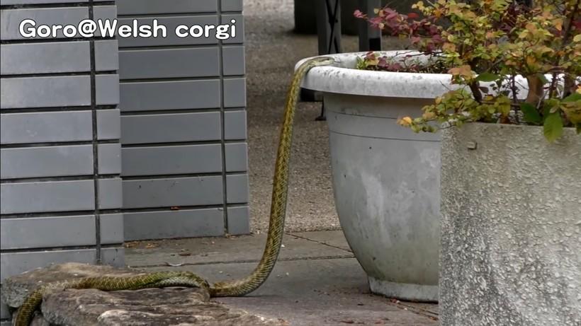 Бетон змеи классифицируйте строительные растворы по их назначению