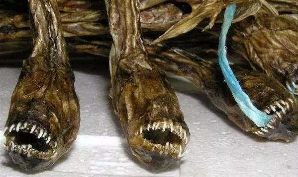 Чужой с берегов Японии: рыба-монстр, которую местные считают деликатесом