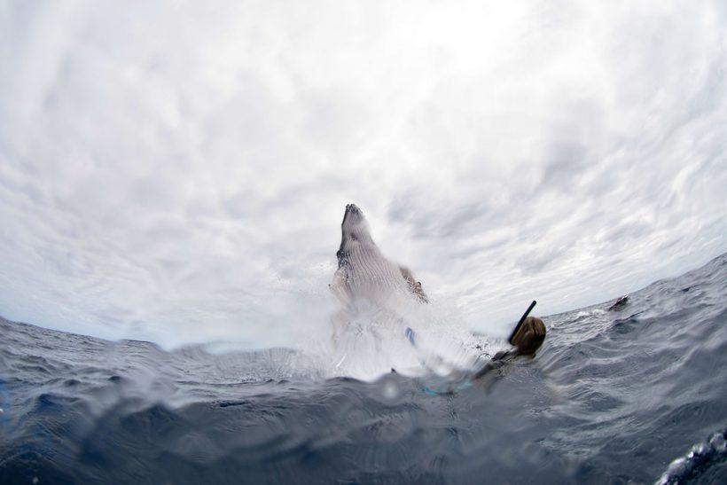 одной фоторедактор выпрыгивает кит в картинке можно пришить вязаному