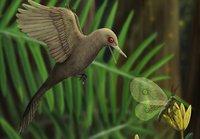 В янтаре нашли останки самого маленького динозавра: он был размером с колибри