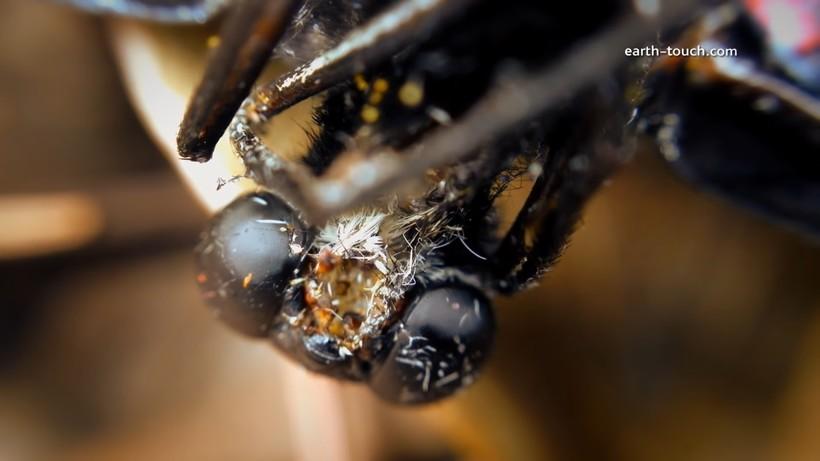 Потрясающее видео, снятое на телефон: происходящие с бабочкой метаморфозы