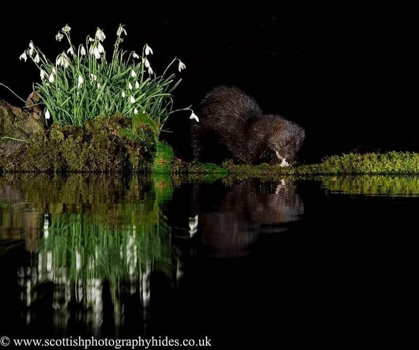 Шотландский фотограф сделал бассейн в лесу для уникальных снимков диких животных