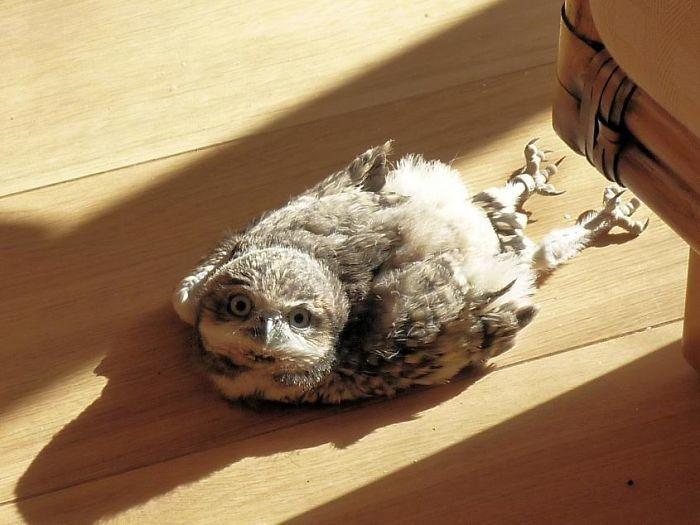Наши забавные питомцы - Страница 4 Sleeping-baby-owls-face-down-3-5ef2f482c3a6f__700