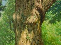 Гиперреалистичные картины природы, напоминающие глоток свежего воздуха
