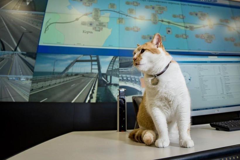 Кот Мостик, проработавший на Крымском мосту четыре года, стал журналистом