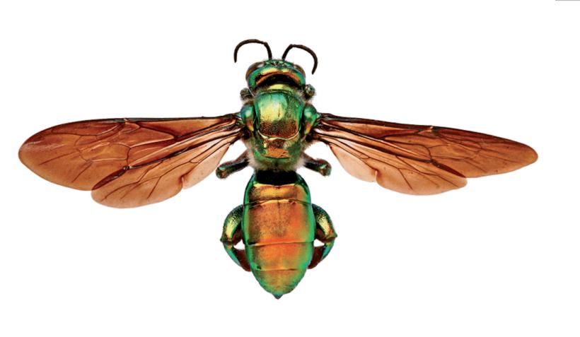 Смитсоновский институт показал самых интересных и необычных насекомых нашей планеты