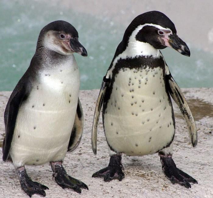 Кто-то подарил машину для мыльных пузырей пингвинам в зоопарке, животные в восторге