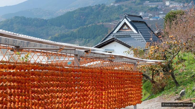 Санбокан: редкий японский фрукт, который столетиями рос только в одном замке