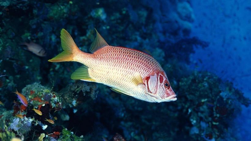 Эволюция постаралась, чтобы рыбам не была страшна турбулентность
