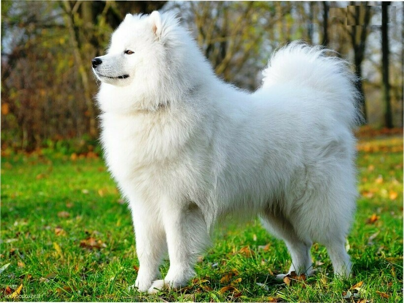 14 самых древних пород собак, которые произошли от волка