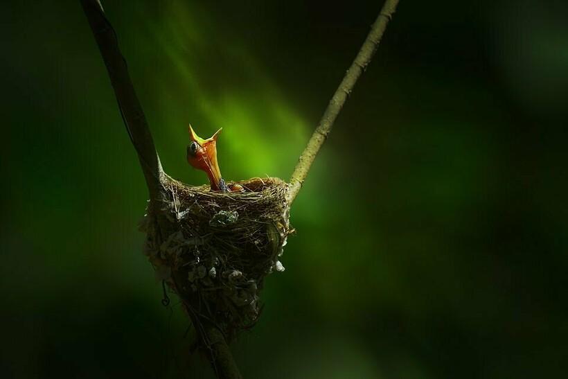 10 лучших фотографий самых маленьких вещей на Земле