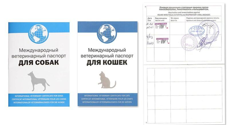 Международный паспорт животного
