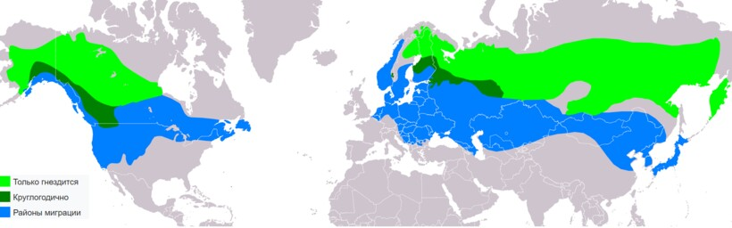 Карта-схема ареала обыкновенного свиристеля