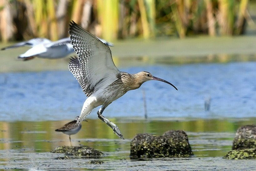 Озерные птицы