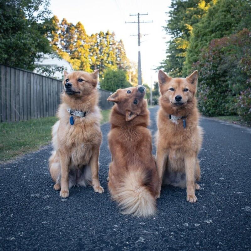 Рыжая троица