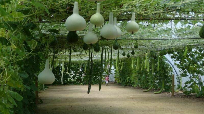 Сады в пустыне и на баржах: 4 самых необычных места, где выращивают растения