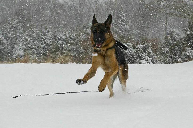 Чудесная собачья жизнь