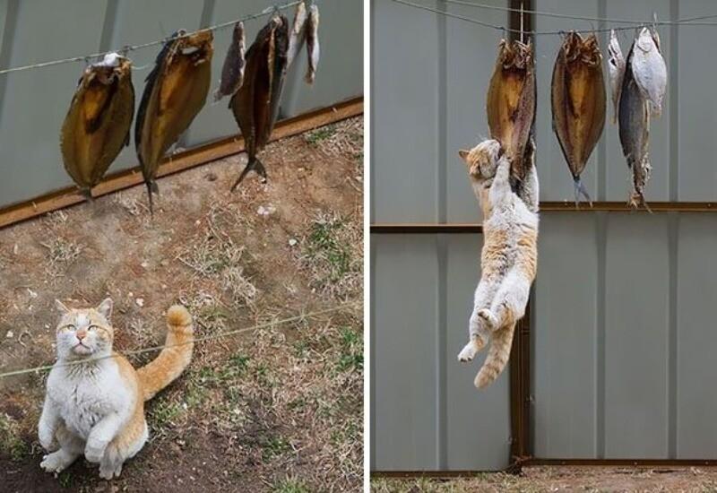 14 фото животных, хозяева которых появились не вовремя