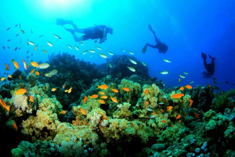 Видео: Исследование недавно открытого нетронутого рифа Пемба в архипелаге Занзибар
