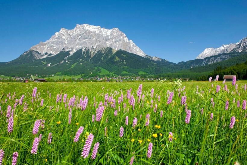 Растительность у подножья горы Цугшпитце