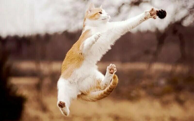 15 способов применения котов в домашнем хозяйстве