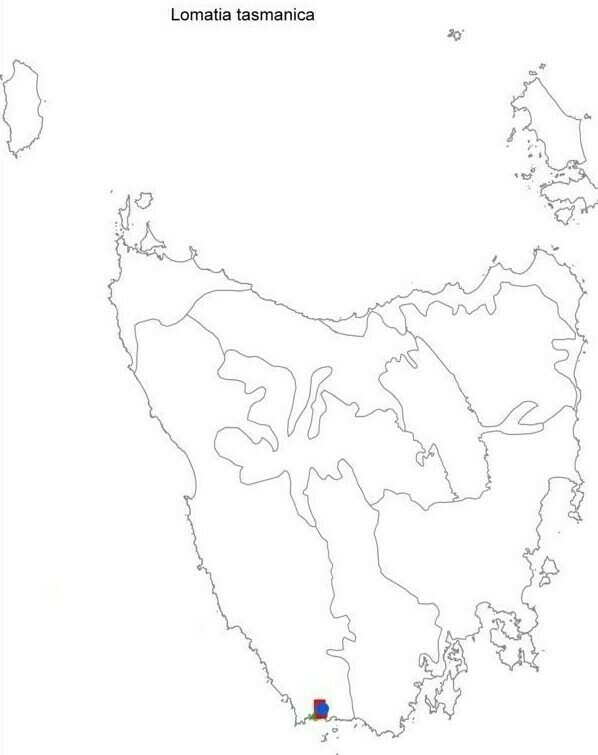 Карта, на которой обозначена территория, где растут редкие деревья-клоны