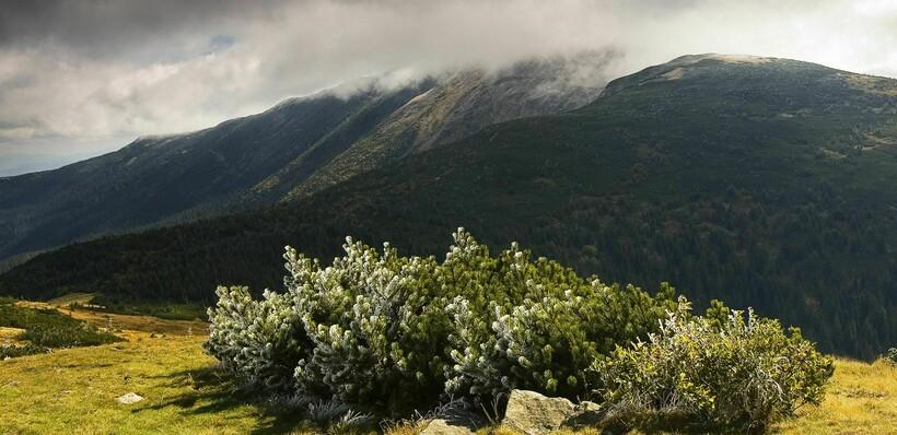Растительный мир горы Бабья
