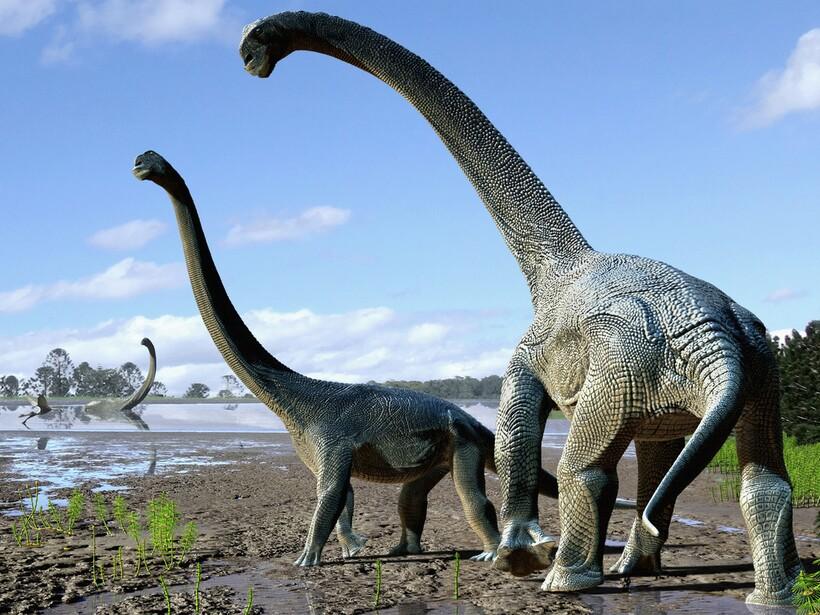 Наличие аномально больших частей тела, вроде шеи, всегда можно обосновать эволюционно