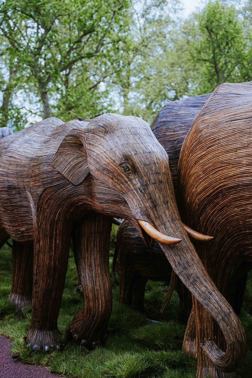 Откуда у Букингемского дворца появилось стадо слонов