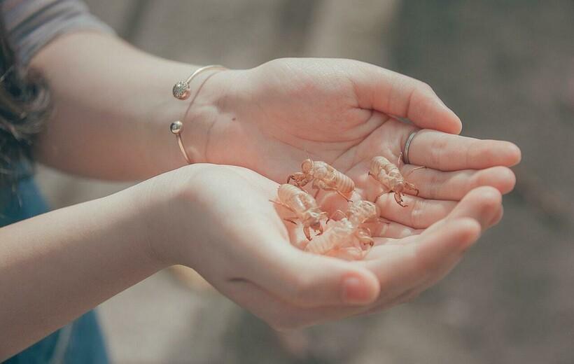 5 причин, почему не стоит ехать на ракушечный морской пляж