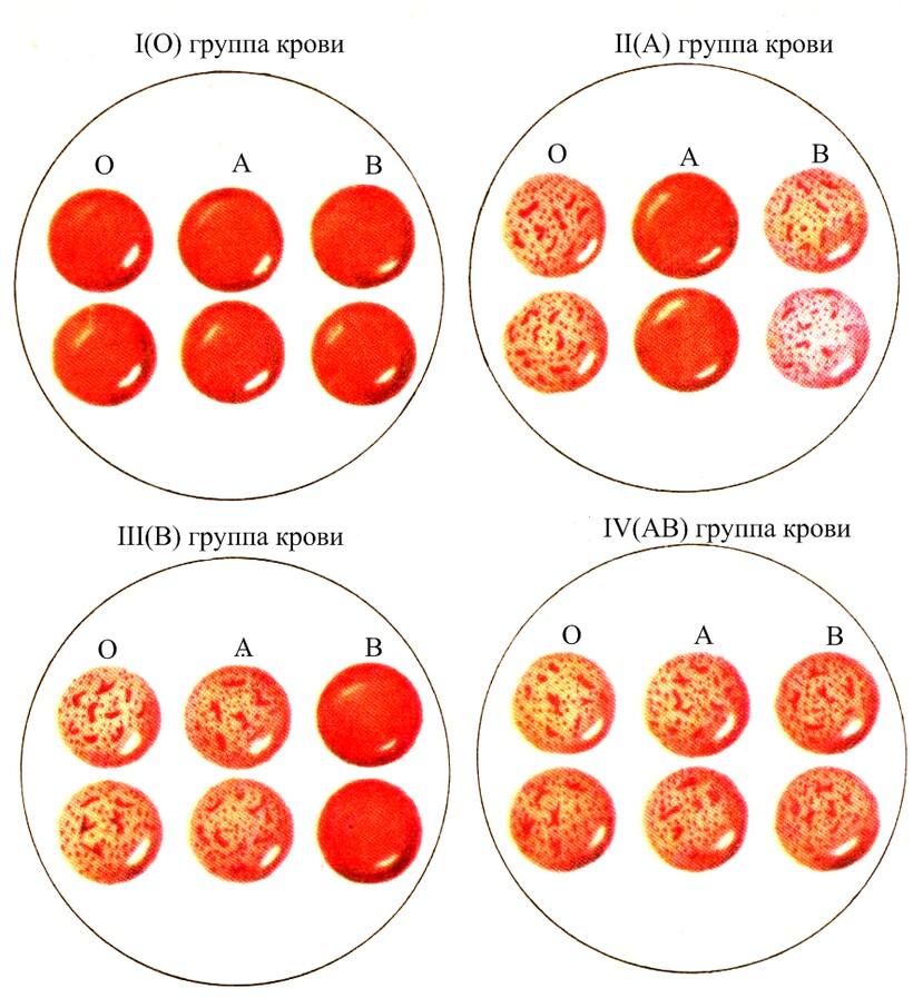 Группа крови может служить источником важной информации для ученых